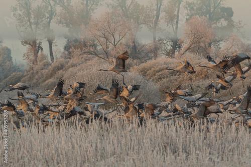 Fototapeta premium Birds In A Field