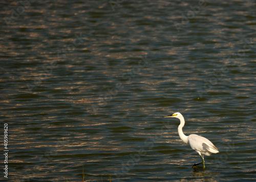 Fototapeta premium Bird In A Lake
