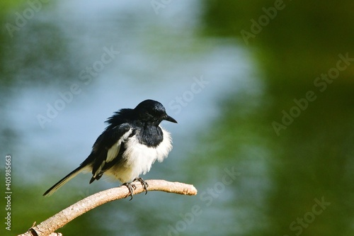 Fototapeta premium Close-up Of Bird Perching On A Tree