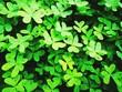 Leinwandbild Motiv Full Frame Shot Of Green Plant
