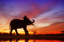 Silhouette Man Sitting Over Elephant By Lake Against Sky During Sunset