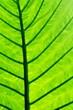 Leinwandbild Motiv Full Frame Shot Of Palm Tree Leaves