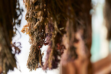 Bundles Of Dried Herbs Are Hung On A Rope In Front Of A Window In A Village House. Selective Focus.Copy Space.
