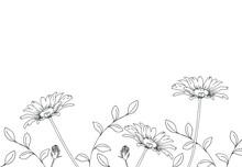デイジーの花 手描き線画イラスト