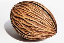 Plant Seep, Pong Pong Seed, Cerbera Odollam Fruit, Othalanga - Suicide Tree, Dried Pong Pong Seed, Suicide Tree, Othalanga