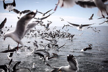 Seagulls In Flight At The Coast Of A Sea