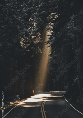 Wonderful shot of sunlight between dense foresttrees on a road
