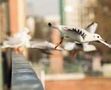 Close-up Of Birds Flying  Photographyfrankfurt