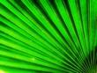 Leinwandbild Motiv Full Frame Shot Of Palm Leaves