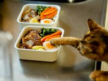お弁当と猫
