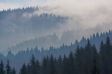 Misty, Cloudy And Majestic Forest Landscape With Black And Blue Silhouettes Of Coniferous Trees On A Mountainside; Early Spring Morning View Of Beskydy Mountains In Czech Republic, Europe