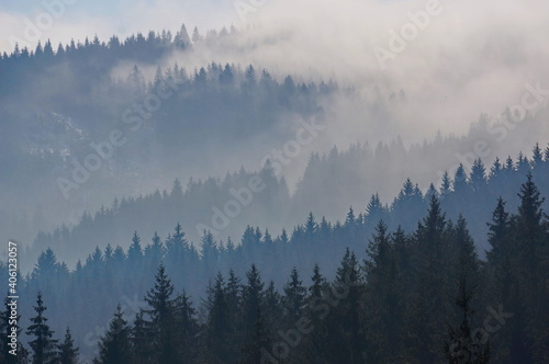 Fotografía Misty, cloudy and majestic forest landscape with black and blue silhouettes of c