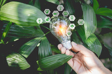 Close-up Of Person Holding Light Bulb By Plants