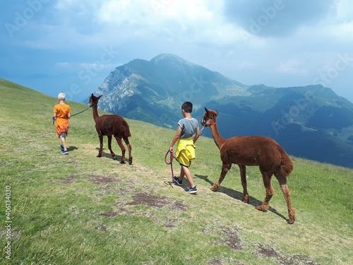 Fototapeta premium Boys With Llamas Walking On Mountain