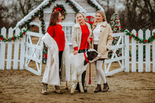 Three Young Pretty Women In White And Red Winter Clothes Posing With Small White And Black Bull Against Decorated Ranch Under The Snowing.