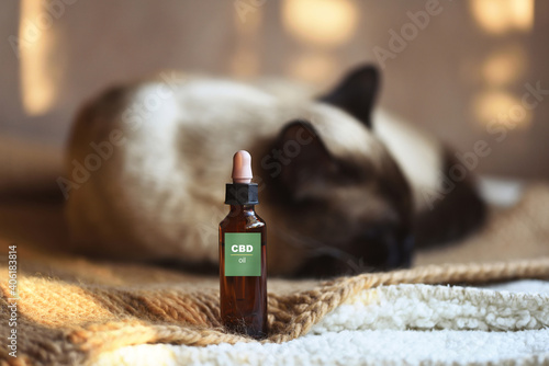 Fotomural Canister of CBD hemp oil for domestic cat, selective approach