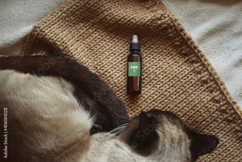 Obraz na płótnie Flat lay concept, CBD canister for animals