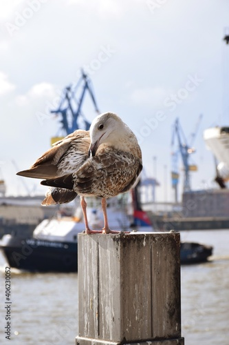 Fototapeta premium Seagull Perching On Wooden Post