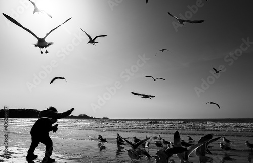 Fototapeta premium Low Angle View Of Seagulls Flying Over Beach Against Sky