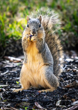 This Is My Acorn And You Cannot Have It!