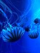 Leinwandbild Motiv Close-up Of Jellyfish In Sea