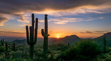 Cactus Plants Growing On Land Against Sky During Sunset
