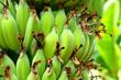 Leinwandbild Motiv Close-up Of Bananas Growing On Tree