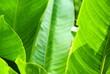 Leinwandbild Motiv Close-up Of Leaves