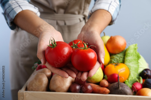 Obraz Farmer holding fresh ripe tomatoes on blue background, closeup. Harvesting time - fototapety do salonu