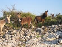 Donkeys Standing On Rocks Against Clear Sky