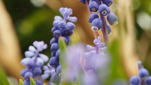 Close-up Of Purple Flowers Blooming In Garden
