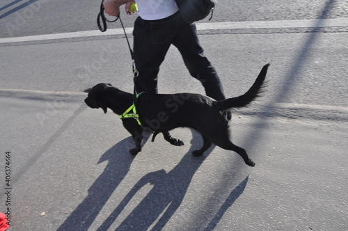 Canvas Man With Dog Walking On Street