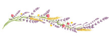 Lavender And Summer Flowers -- Narrow Banner. Long Border, Entwined Flowers In The Shape Of A Wave, Vector Illustration, Design Element.
