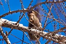 木の上のエゾリス