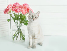 Valentine's Day Cat Greeting Card. Bouquet Of Flowers Roses. Mother's Day Congratulations. Happy Birthday Template. Wedding Invitation. Flowers And Gifts Boxes On White Background