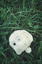 Head Of A Toy Abandoned On The Grass