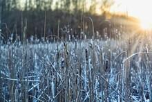 Frozen Grass At Sunset At Sweden