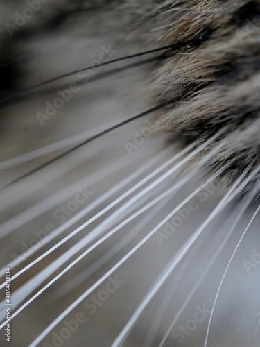 Close-up Of Cat Whiskers Fototapeta