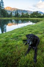A Black Labrador Retriever Rests In Front Of Mountains In Colorado.
