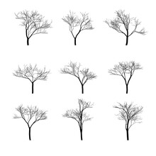 Dry Bare Trees Silhouette Set