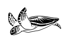 Graphic Sea Turtle Swimming