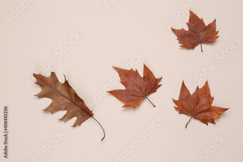 Fototapety, obrazy: Dry fallen leaves on beige background. Autumn time