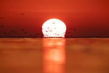 Black-headed Gulls And Dramatic Sunrise At Akser Coast Of Bahrain