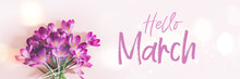 Hello March Text. Creative Layout Pattern Made With Spring Crocus Flowers On Pink Background. Flat Lay, Banner Size. Spring Minimal Concept.