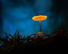 Glowing Mushroom In The Night