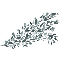 Abstract spray of muted green stems and leaves, on a white background