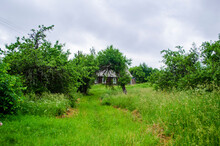 Abandoned Cottage In An Apple Orchard .