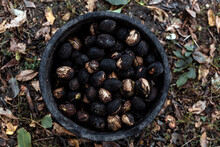 Top View Of Full Plastic Bucket With Whole Walnuts In Black Shell