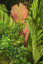 Tropical Foliage Background Of Palm Trees And Vines