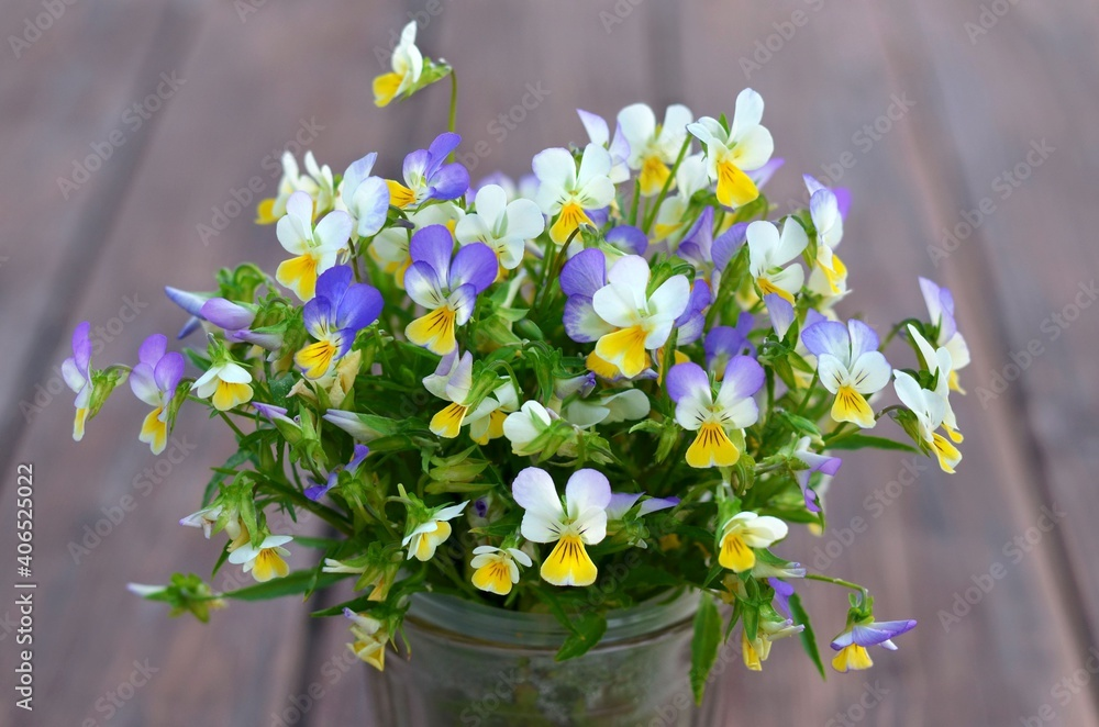 Fototapeta Bouquet of blooming fragrant wild pansy or viola tricolor